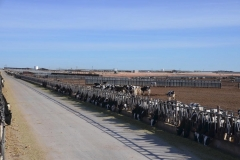 South-Slope-Dairy-in-Curry-County-New-Mexico-11